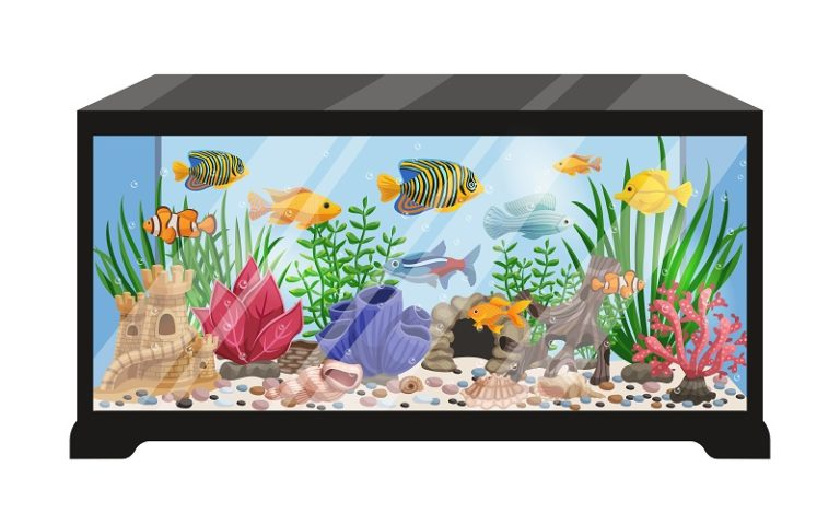 BEST AQUAPONICS FISH TANK KITS