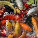 Best Fish Foods