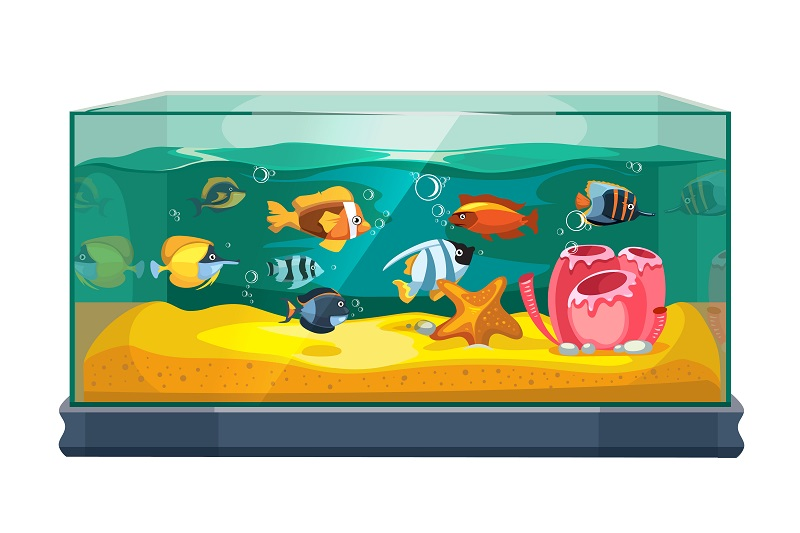 Best Small Fish Tanks For GoldFish