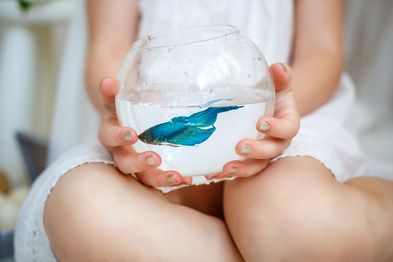 best fish tank for kid