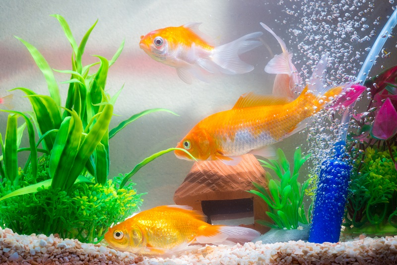 best fish tank for office