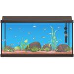 best fish tank heater
