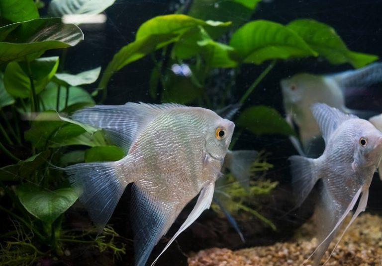 Best Aquarium Plants Reduce Nitrates