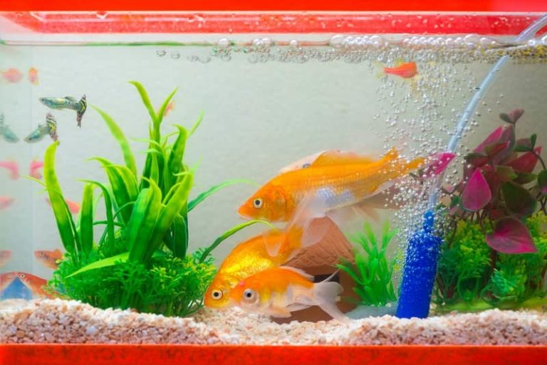 best aquarium co2 diffusers