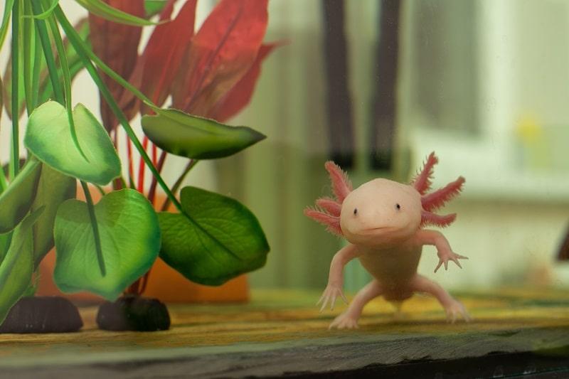 best filter for axolotl
