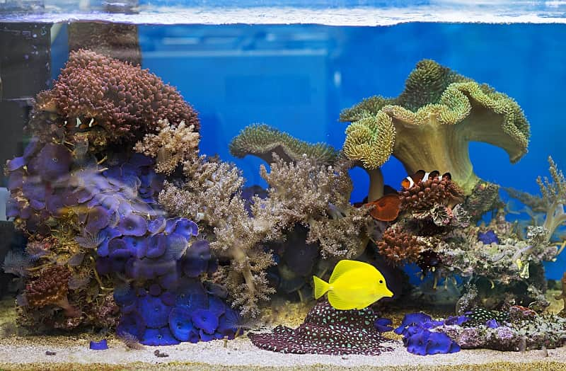 best filter for saltwater tank