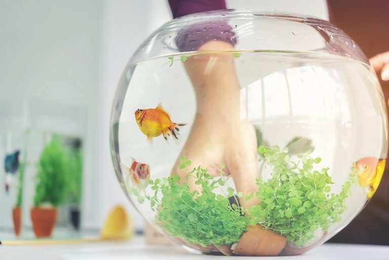 best fish tank for goldfish