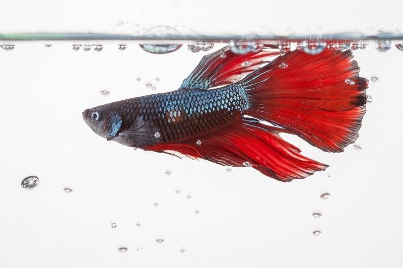 best water heater for betta fish