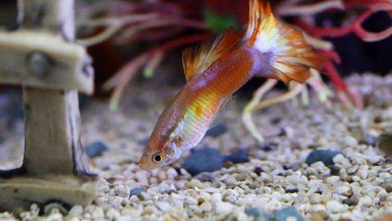 best aquarium protein skimmers