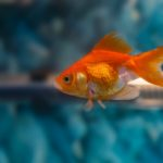 best filters for goldfish
