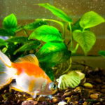 best filters for small fish tank